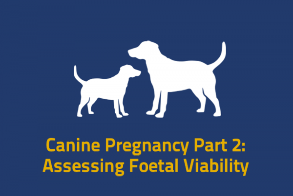 Canine Preg Part 2