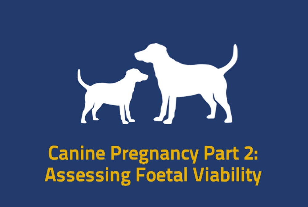 Canine Pregnancy Part 2: Assessing Foetal Viability
